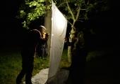 Tallinna Botaanikaaed kutsub ööliblikatega tutvuma