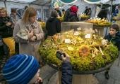 VIDEO JA FOTOD: Seenefestival avas Eesti Loodusmuuseumi seenenäituse