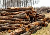 Võltsija müüs edasi eakale naisele kuuluva metsa raieõiguse
