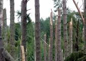 Lõuna-Eestis on pärast tormi pikali pea 100 000 tihumeetrit puitu
