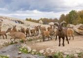 Tallinna loomaaia 12 dagestani tuurid alustasid teekonda Gruusiasse