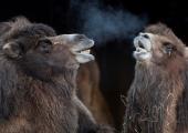 Detsembrikuus saab loomaaias tutvuda videviku- ja ööloomadega