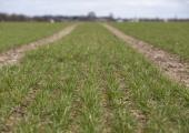 Statistikaamet: tänavune põllumajandustoodang kerkib miljardi euroni