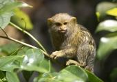 PILDID JA VIDEO! Ahvipäev rikastas loomaaia primaatide toimetusi erinevate kingitustega