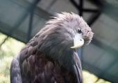 Loomaaia kotkaste kaitse päev kutsub maailma vaatama läbi kullipilgu