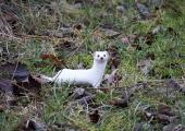 VIDEO! Loomaaia asukas nirk jookseb ringi valge talvekasukaga