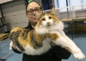 GALERII: Näitusel esitleti kõige uhkemaid kasse
