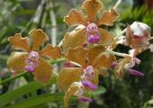 Tallinna Botaanikaaias saab näha eksootilisi iludusi