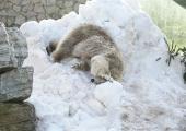 Tallinna loomaaed kutsub talvisel koolivaheajal jääkarupäevale