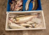 Eesti loomakaitsjad soovivad elusloomadega kauplemise keeldu turgudel