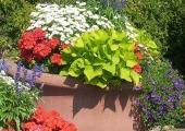 Tallinna Botaanikaaias toimub konteinerhaljastuse õpipäev