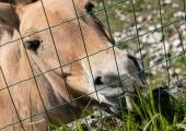 Juuli- ja augustikuu kolmapäevadel saab loomaaia asukatega lähemalt tutvuda