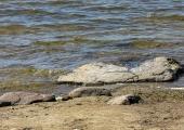 Eksperdid kinnitavad: Stroomi ranna vesi sobib ujumiseks