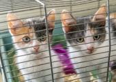 Tallinna loomade varjupaik: üha rohkem loomi leiab endale kodu