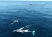Turist sai Austraalias vaala sabalöögist raskelt viga