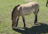 Päästjad aitasid hobuse kraavist välja