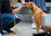 GALERII! Lasnamäel filmiti Eesti suurimat koertereklaami