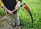Vikatiga niitmise ja niidutaimed saab selgeks botaanikaaias