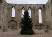 Jõulupuu jõudis Pirita kloostri varemete vahele