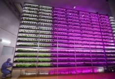 VIDEO! Maailma suurim sisefarm on 100 korda produktiivsem kui tavaline põllumaa