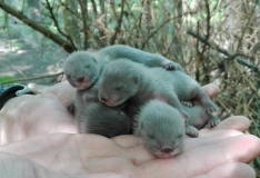 KÕIGE NUNNUM UUDIS: Loomaaias sündisid imearmsad naaritsabeebid!