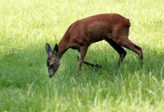 Keskkonnaamet: heinatöödel arvestage looma- ja linnupoegadega