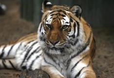 GALERII! Aleksei Turovski: inimesed boikoteerige tiigrist tehtud ravimeid!