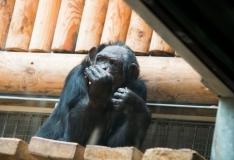 Herilased kiusavad papagoisid ja šimpanse