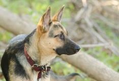 Loomakaitsjad: hooliv omanik kiibistab oma lemmiku!