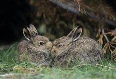 Keskkonnaamet kutsub heinatöödel säästma looma- ja linnupoegi