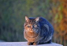 Eesti Loomakaitse Selts otsib täiskasvanud kassidele armastavaid peresid