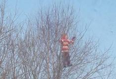 Päästjad tõid Viimsi koolitüdruku puu otsast alla