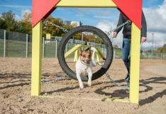 Uus geoportaal aitab leida muinsuskaitsealasid ja koerte jalutusväljakuid