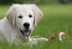 Eesti Loomakaitse Selts: igasugune abi loomadele on vajalik