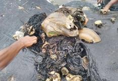 VIDEO: Indoneesias leiti vaala kõhust pea kuus kilo plastesemeid