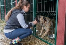 PetCity kutsub üles aitama varjupaikade loomi