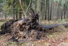 Tormikahjud Lõuna-Eestis metsades on tohutud