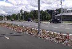 VIDEO! Reidi teele istutatud taimestik on kenasti kasvama läinud
