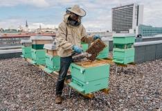 LHV pangahoone katusel elavad mesilased andsid esimese meesaagi