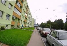 Linnumees Haaberstis tegutseb jälle
