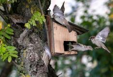 Tallinn annab loodusfotode võistlusel välja oma eripreemiad