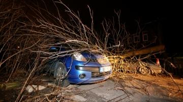 Päästeamet hoiatab tormiga murduda võivate puude eest