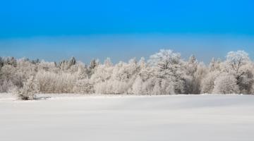 Eksperdid: Eesti ei tohi jätkata kliimavaenulikku metsapoliitikat, mis kasutab puitu tuleviku arvelt