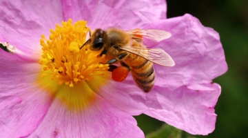 PMK: Mesilaste akrediteerimata testimismeetod peaks olema kohtus pädev