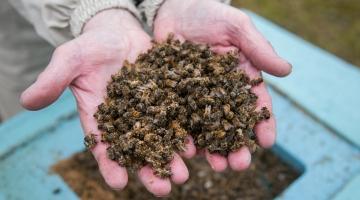 Uus mesilasperede toetus aitab haigustega  toime tulla ja mee hinda ostjale alandada
