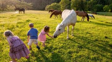 Küsitlus: maal elamise eeliseks peetakse head kasvukeskkonda lastele