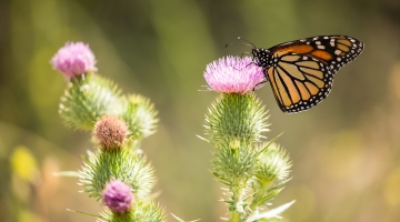 Uuring: käimas on putukate massiline väljasuremine