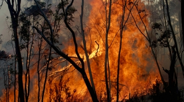 VIDEO! KÕLVART AUSTRAALIA PÕLENGUTEST: Iga riik peaks aitama hävimisohus liike päästa