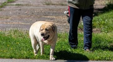 GALERII! Ilma rihmata koera omanikku võib oodata kuni 800-eurone trahv
