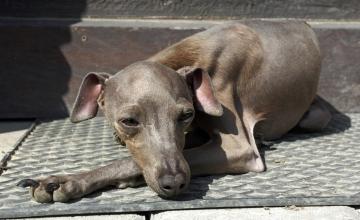 Lugeja küsib: kas koeri tohib töö juurde kaasa võtta?